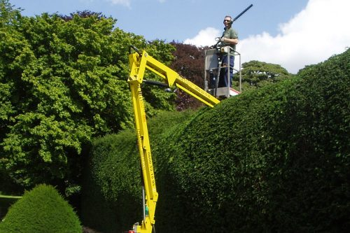Yew hedge trimming with cherry picker in Heswall, Wirral