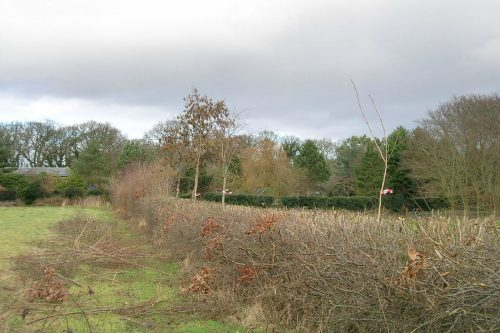 Tall hedge reduction in Storeton